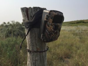 Trail Camera On Fence Post