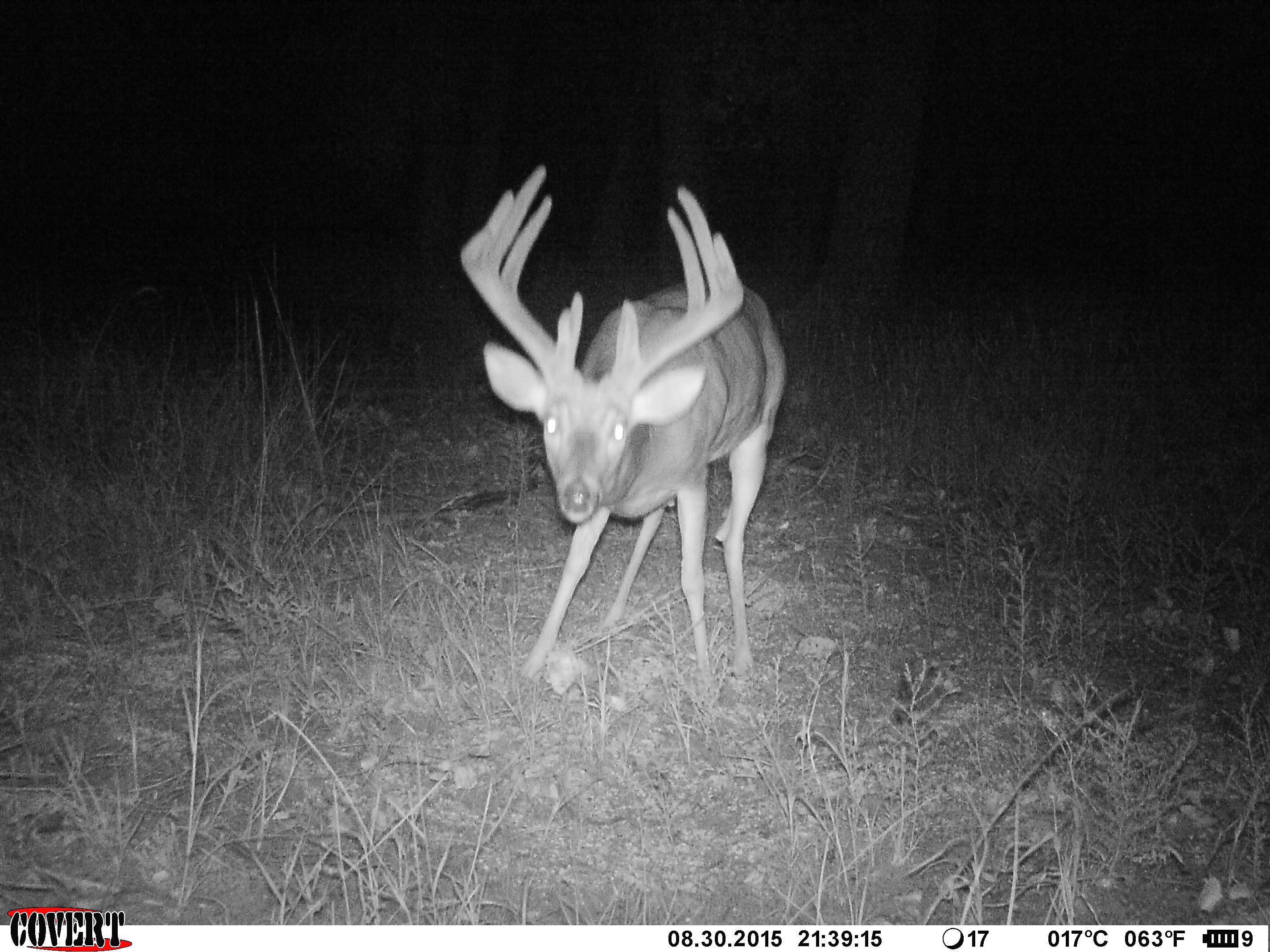 Big Buck Trail Camera