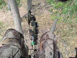 Tree Stand View