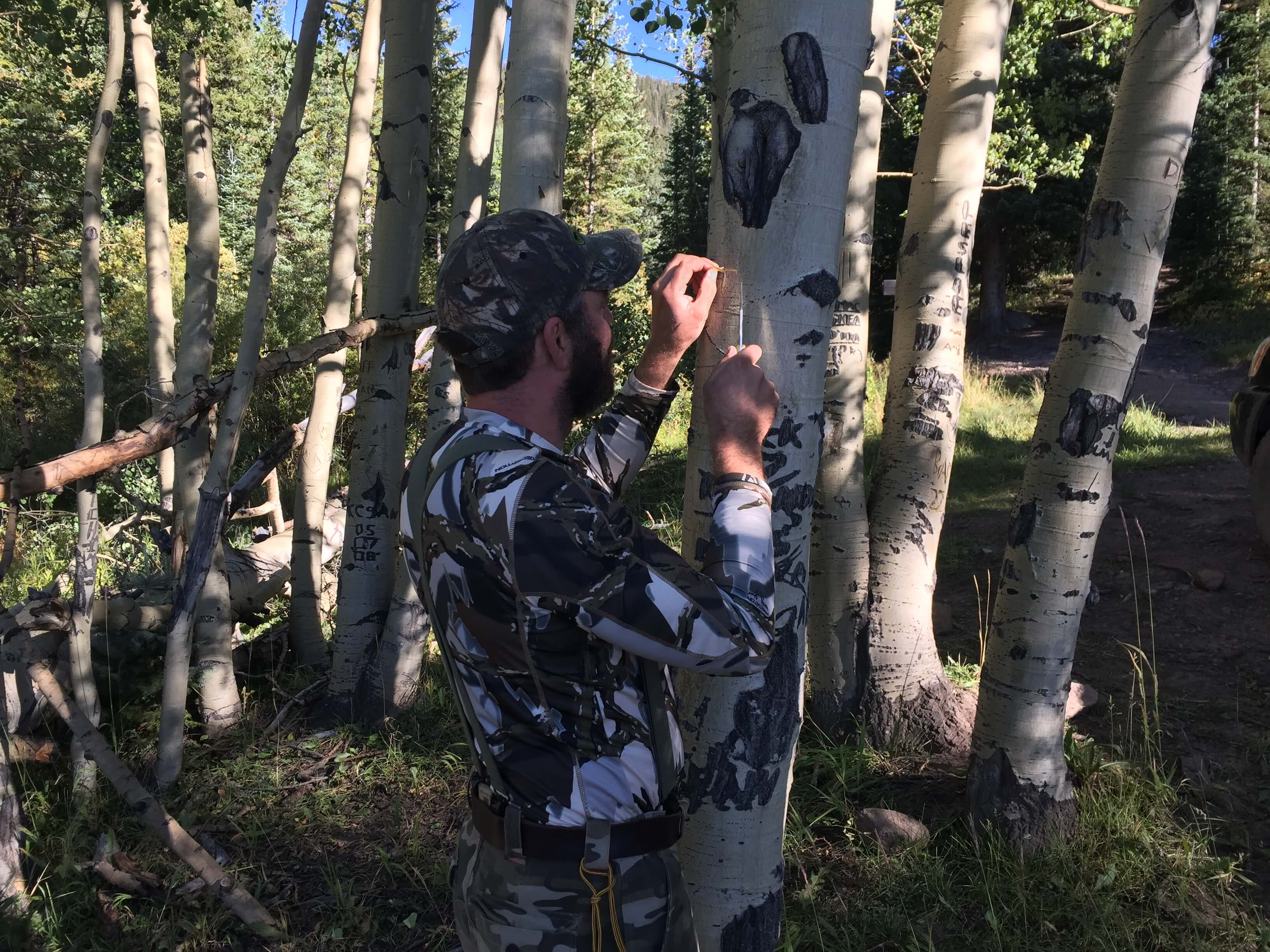 aspen tree carving