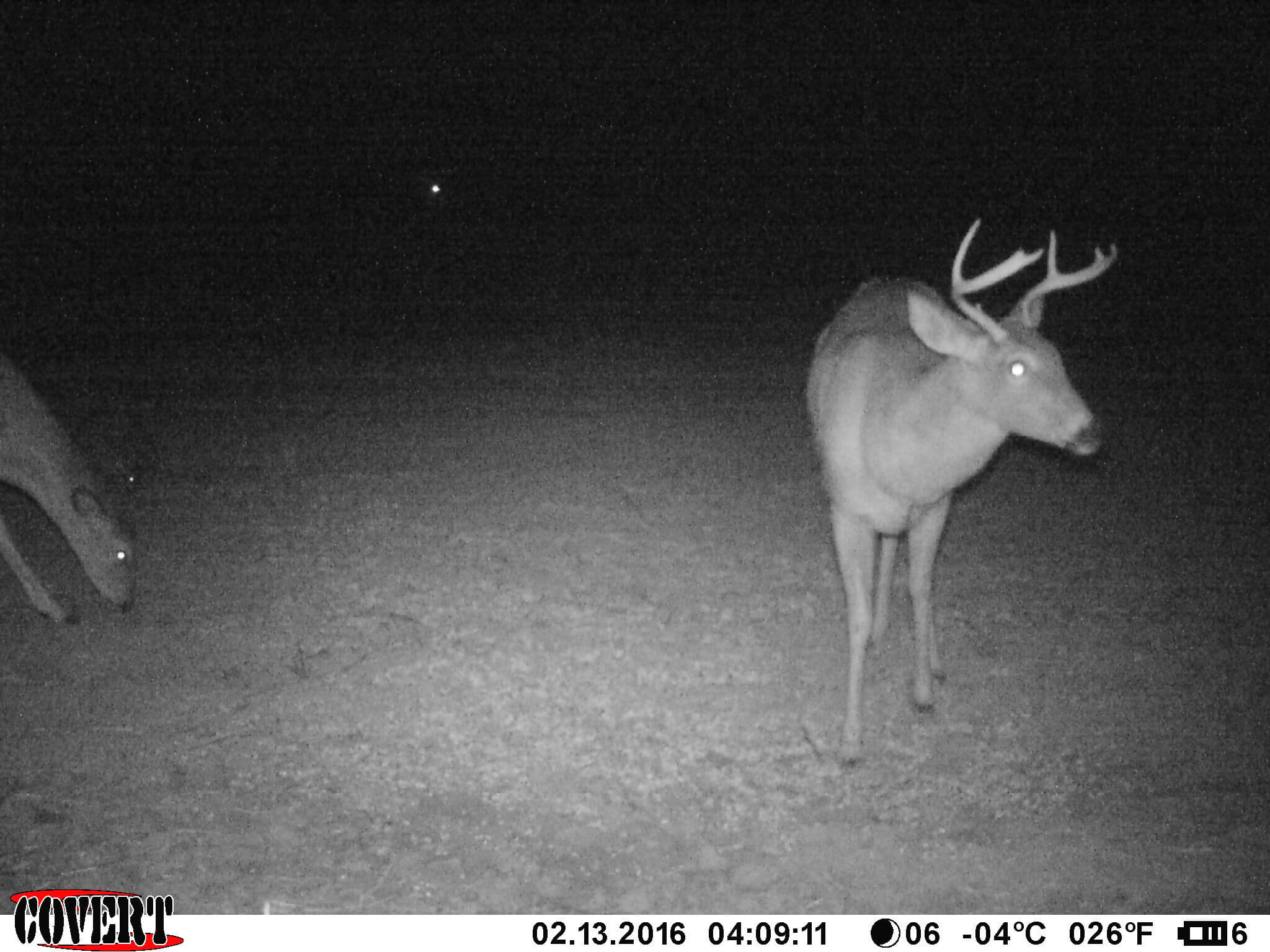 Kansas Trail Camera