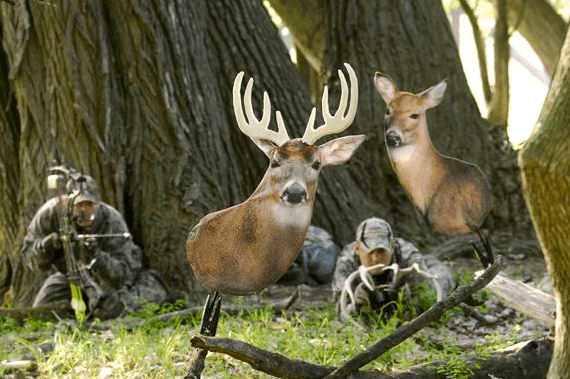 Buck and Doe Decoy
